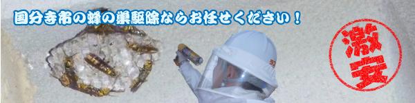 国分寺市の蜂の巣駆除