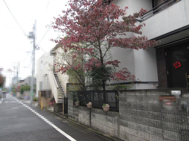 玄関横の植木