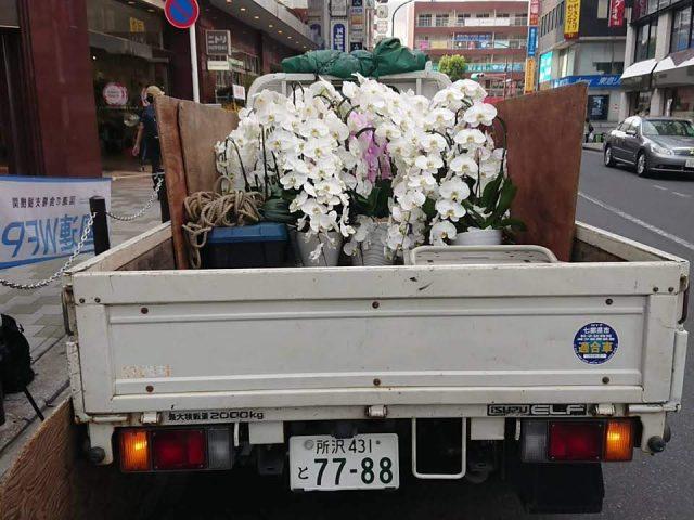 トラックに胡蝶蘭