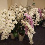 品川区で胡蝶蘭23鉢を回収してきました!